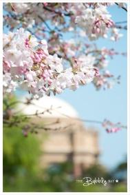 spring_presidio